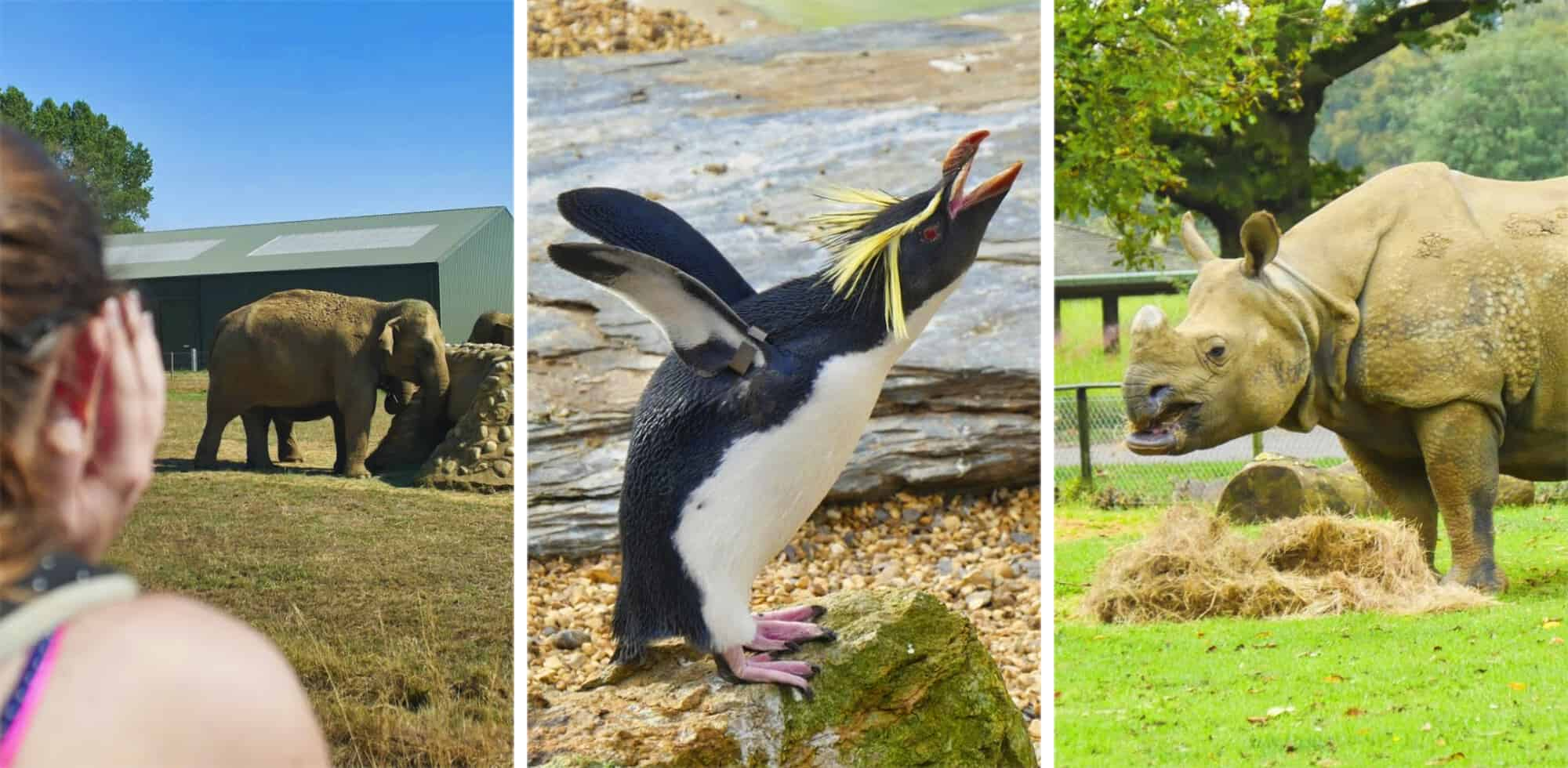 (Honest) ZSL Whipsnade Zoo Review: The Ultimate Guide for a Perfect Day Out via @girlsgonelondon