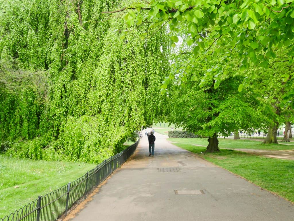 A man walking under a green tree over a path in Hyde Park, London