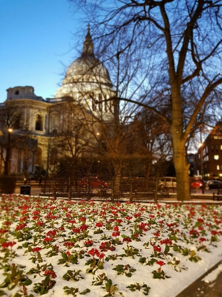 St Paul's Cathedral with snow in front with red flowers at night